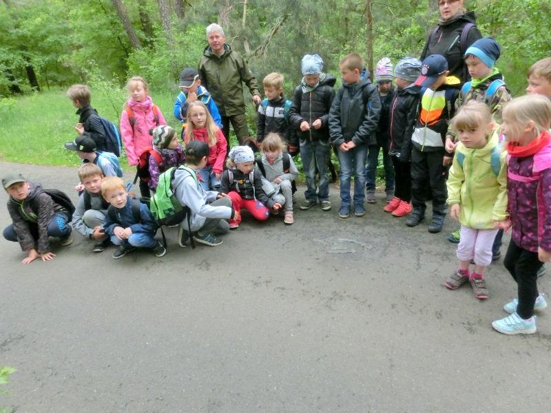 Flex im Wald GS Drebkau
